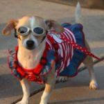 איך ננצל את חופשת הקיץ לטובת הכלב שלנו?