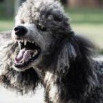 מהי השפעת האזעקות והירי בדרום על הכלבים?