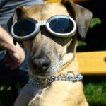 תמונה של כלב מגניב