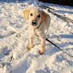 מה לעשות אם הכלב מסרב לצאת החוצה בחורף?