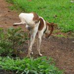 תמונה של כלב מבצע צרכים