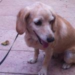 תמונה של כלב קשור עם רצועה