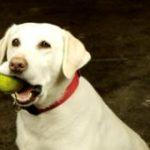 משחקים מפעילים לכלב לשמירה על המשקל ולדיאטה