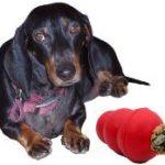 איך מונעים מהכלב להרוס את הבית?איך מונעים שעמום מהכלב?