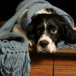 מה עושים עם כלב שפוחד מרעש רעמים