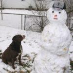 מה הסכנות לכלב בחורף ואיך נמנע אותם?