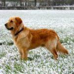 6 טיפים איך מפעילים את הכלב בחורף בבית