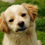 חופשה בלי הכלב – מאמר 1 דוגסיטר