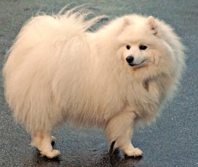 תמונה של כלב בעל פרווה ארוכה ומלאה