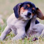 איך תפטרו מקרציות על הכלב תוך 3 שעות בקלות ובמהירות?