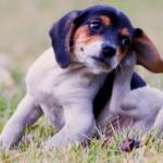 7 דרכים להרגיע כלב מתגרד