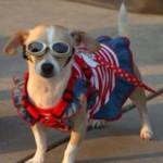 איך לצאת לטיול עם הכלב בבטחון?