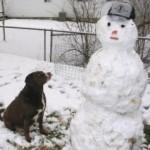 האם כלבים צריכים סוודר בחורף