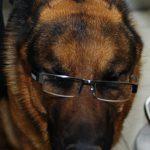 איך תשמור על בריאות הכלב שלך כל השנה מאמר 3