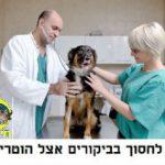 איך לחסוך ביקורים עם הכלב אצל וטרינר?