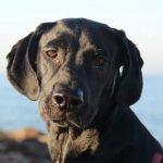 האם לתת לכלב מולטיויטמין?
